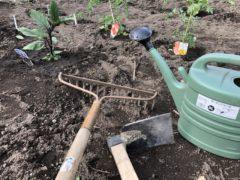 裏庭の畑が始まりました。